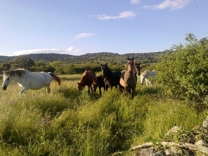 Una de las familias de caballos de mi amigo Ricardo