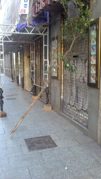 El árbol cortado y la metáfora del vandalismo y las ideologías