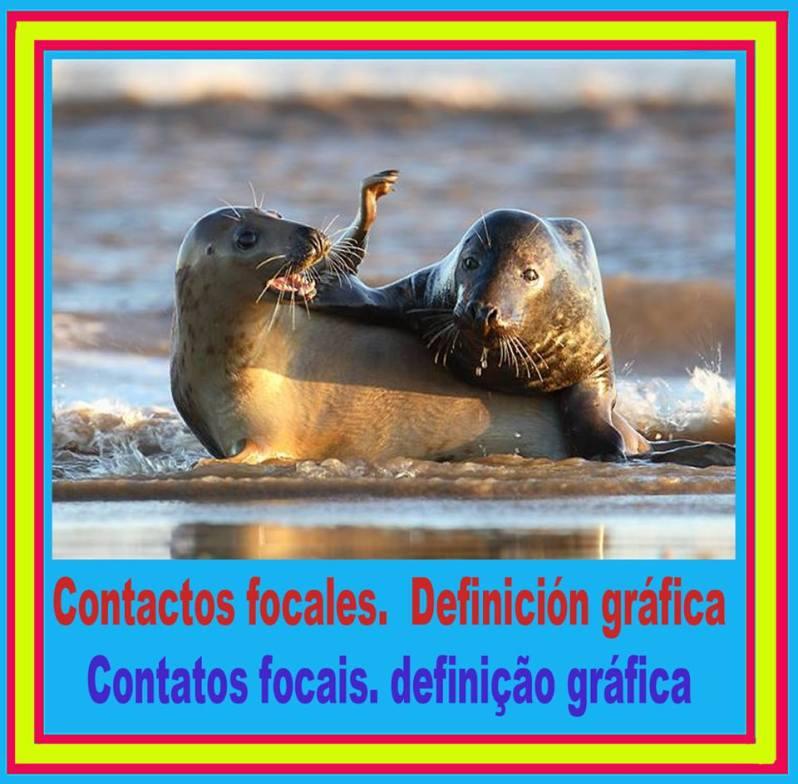 contactos focales