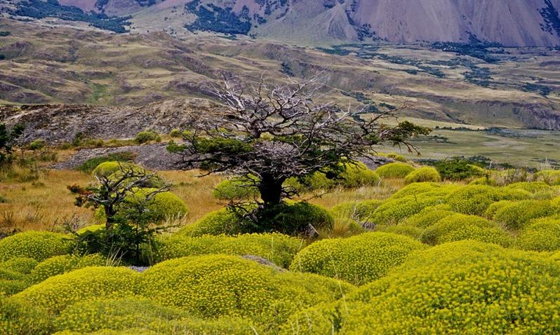 desierto patagónico.