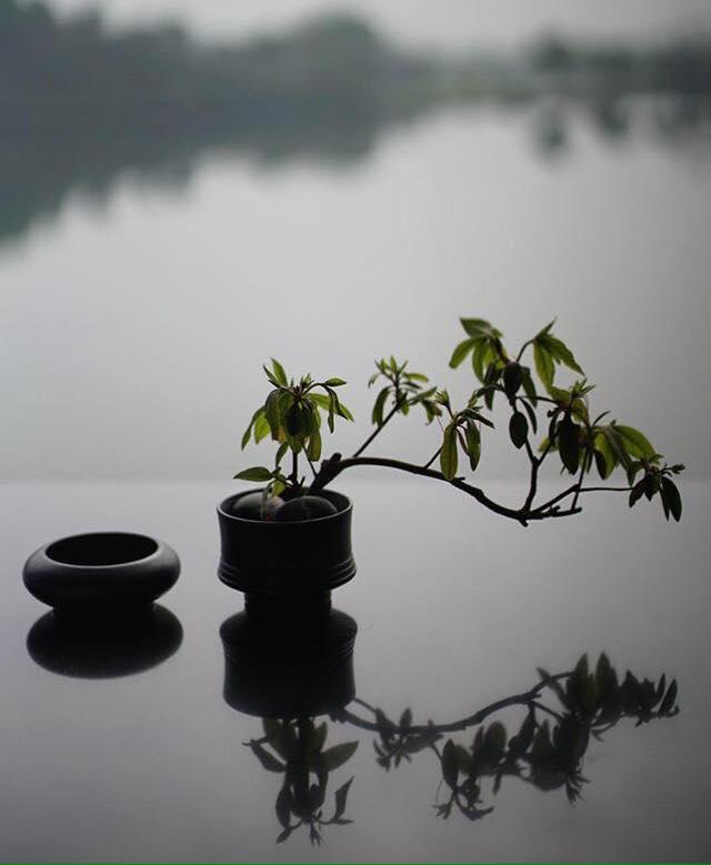 Nuestro camino es el de practicar, un paso cada vez, una respiración cada vez... sin el objetivo de conseguir nada